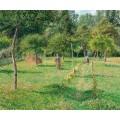 Сад в Эрагни, 1896 - Писсарро, Камиль
