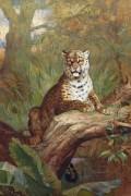Леопард на дереве - Торберн, Арчибальд
