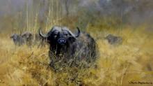 Азиатские буйволы в высокой траве - Шеперд, Девид (20 век)