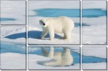 Белый медведь - Сток
