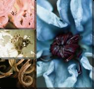 Цветы марко 3