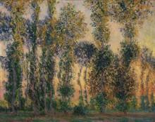 Тополя в Живерни, 1888 - Моне, Клод