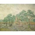 Оливковый сад - Гог, Винсент ван