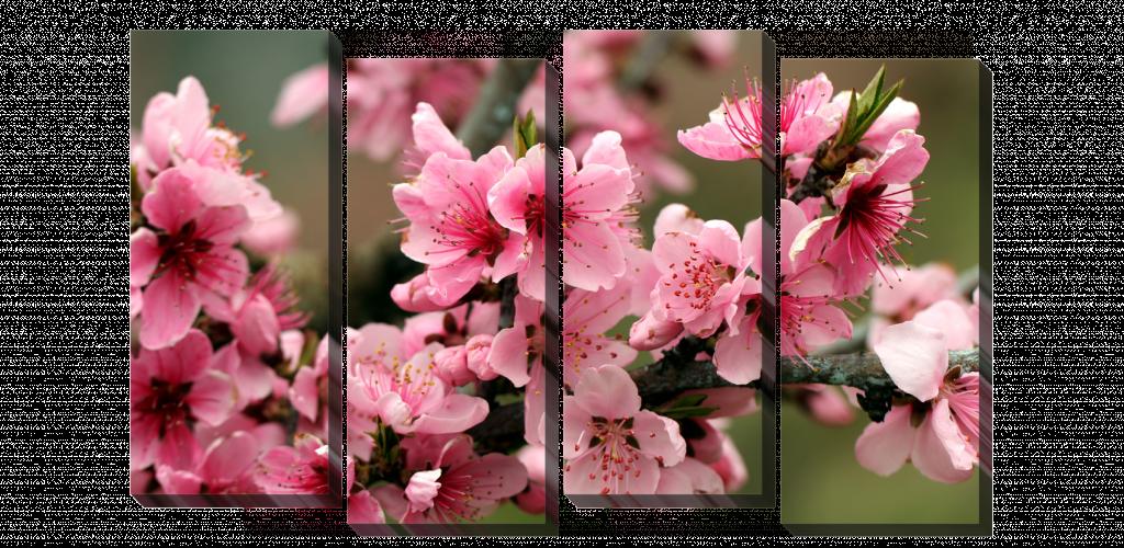 Цветущая ветка_2