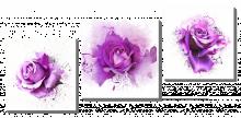 Брызги роз