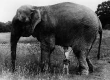 Мальчик  под слоном - Драйстэйл, Джон