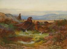 Летний пейзаж с рябчиками - Торберн, Арчибальд