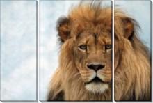 Лев. Царь зверей - -