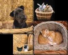 Животные в корзине