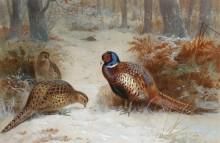 Фазаны, ищущие пропитание в снежном лесу - Торберн, Арчибальд