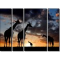 Жирафы Африки - Сток