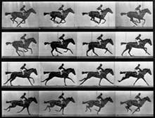 Движение скачущей лошади - Майбридж, Эдвард