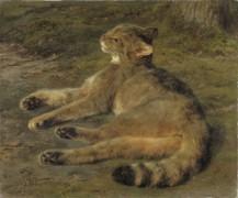 Дикая кошка - Бонёр, Роза