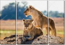 Пара львов - -
