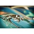 Красавец ягуар - Сток