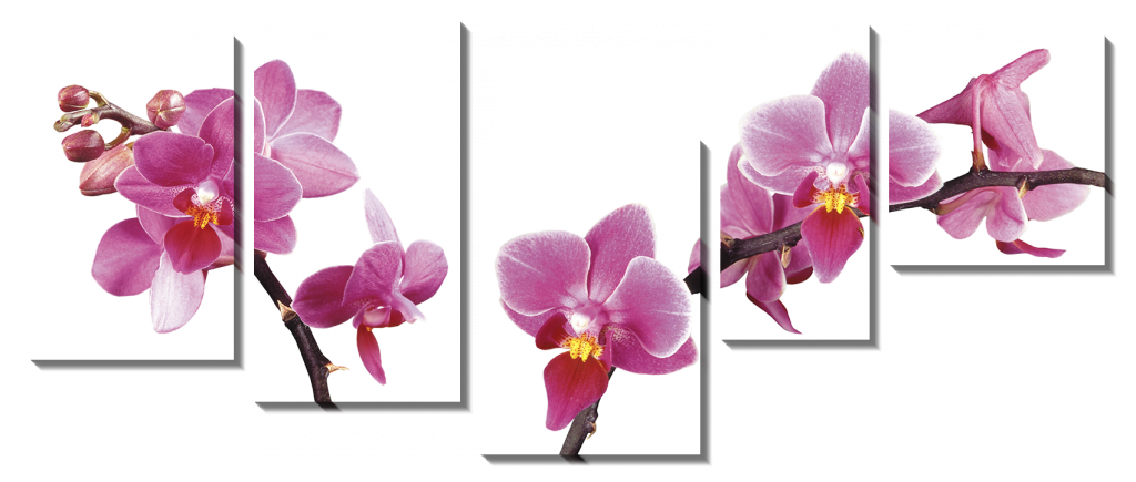 Ветки с орхидеями