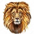 Царь зверей - Сток