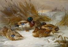 Зимний пейзаж с кряквами - Торберн, Арчибальд
