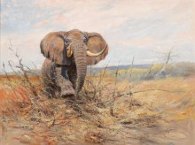 Слон - Лоренц, Вильгельм