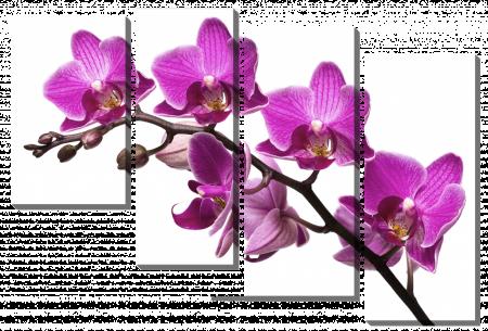 Ветка с розовыми орхидеями