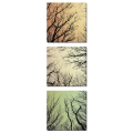 Ветки деревьев