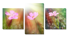 Цветы в лучах_2