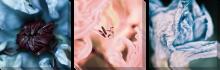 Цветы пастель