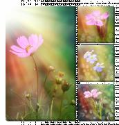 Цветы в лучах
