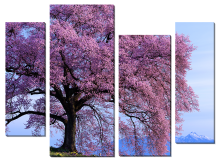 Дерево в розовом цвету