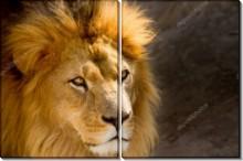 Портрет льва - -