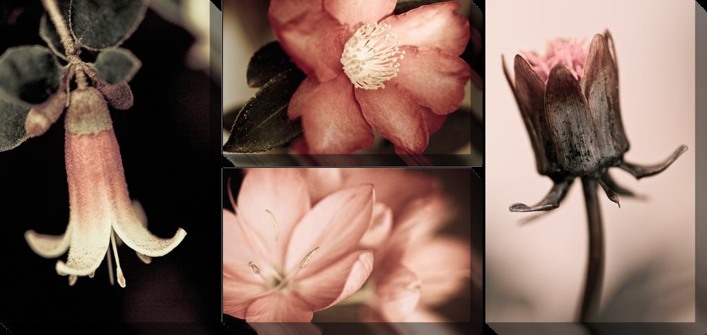 Цветы макро