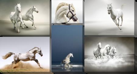 Лошади_2