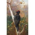 Черный дятел в лесу - Торберн, Арчибальд