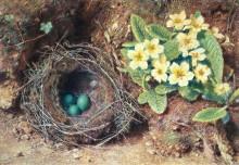 Первоцветы и птичье гнездо - Хант, Уильям Холман
