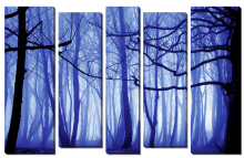 Синий лес_2