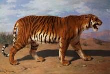 Преследующий тигр - Бонёр, Роза