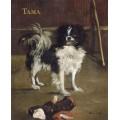 Тама, японская собака - Мане, Эдуард