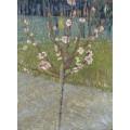 Цветущее миндальное дерево (Almond Tree in Blossom), 1888 - Гог, Винсент ван