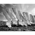 Китовые кости в Антарктиде - Ренье, Крис