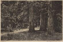 Ели (Ели в Шуваловском парке), 1886 - Шишкин, Иван Иванович