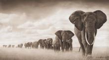 Слоны, идущие в траве - Брандт, Ник