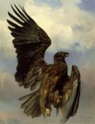 Раненый орел - Бонёр, Роза