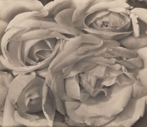 Розы - Модотти, Тина