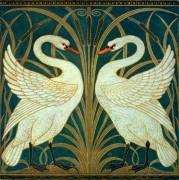 Лебеди -  Крейн, Уолтер