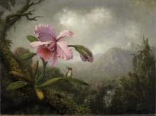 Пейзаж с орхидеей и колибри - Хед, Мартин Джонсон