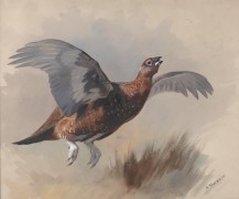 Красная куропатка в полете - Торберн, Арчибальд