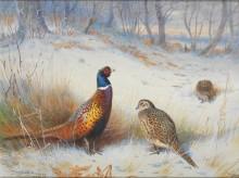 Зимний пейзаж с фазанами - Торберн, Арчибальд