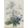 Букет цветов с насекомыми - Редуте, Пьер-Жозеф