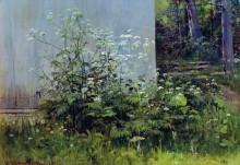 Цветы у забора, середина 1880-х - Шишкин, Иван Иванович