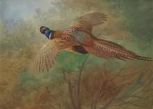 Летящий фазан - Торберн, Арчибальд